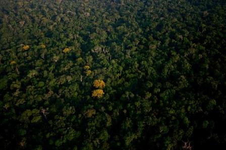 Amazonie : les enjeux d'un massacre