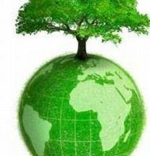 Green business : les investissements verts ne connaissent pas la crise
