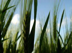 L'agriculture française, un secteur sous perfusion