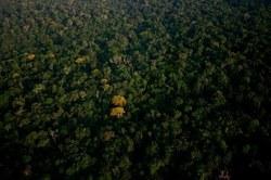 Amazonie : ça ne s'arrange pas