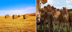 Le nouveau visage des agriculteurs français