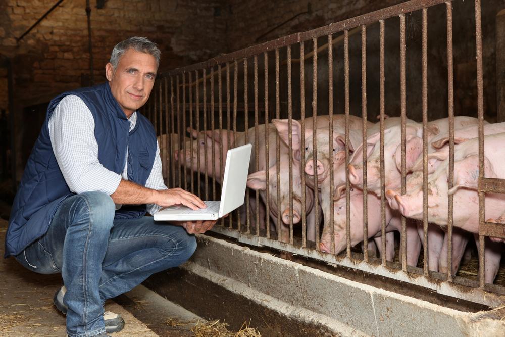 Crédit : éleveur de porc par Shutterstock