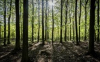 La filière bois profite de la hausse des prix