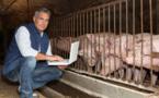 Eleveurs de viandes : les raisons de la colère